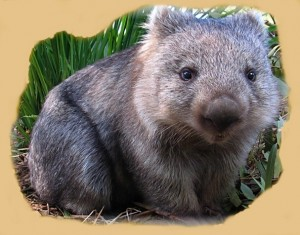 Wonderful Wombat #B18408